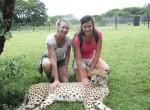 why are cheetahs inbreeding